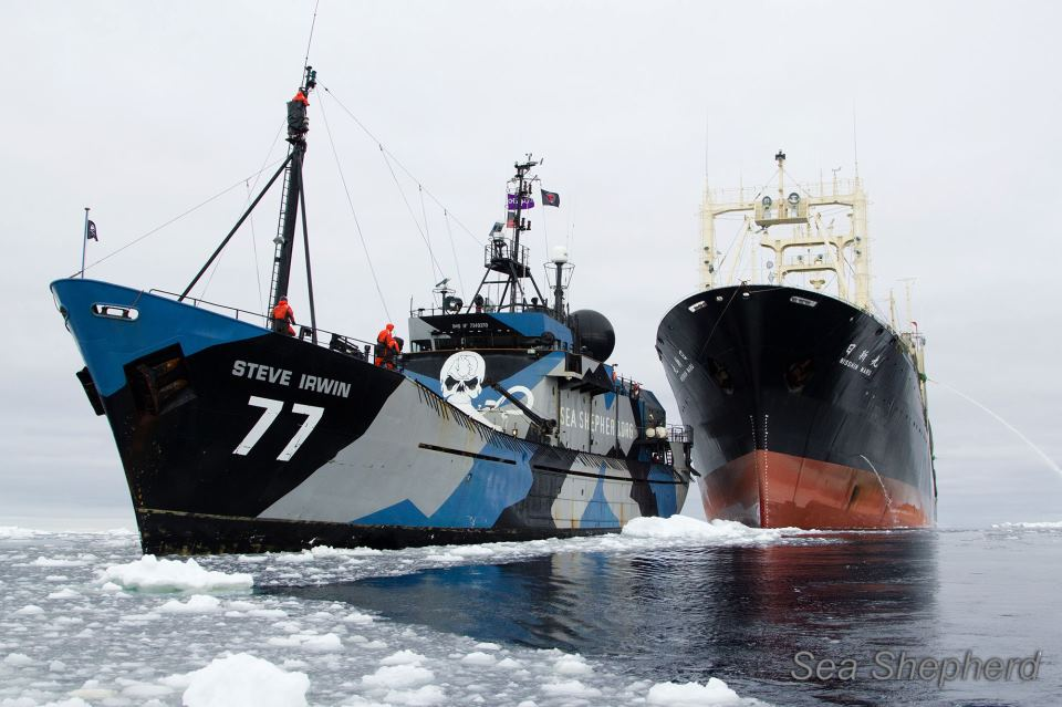 photo-sea-shepherd-nishin-maru