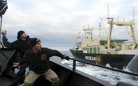 seashepherd-280x175
